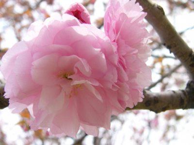 Bunga Spesial Untuk Hikaru - Part 1
