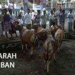 Sejarah Hari Raya Idul Adha