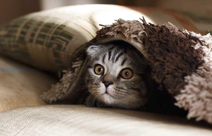 Contoh Teks Lho Laporan Hasil Observasi Singkat Kucing Penulis Cilik