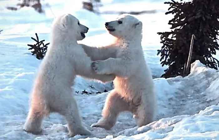 Cerita Fabel Pendek Anak Beruang Sakit Gigi Penulis Cilik
