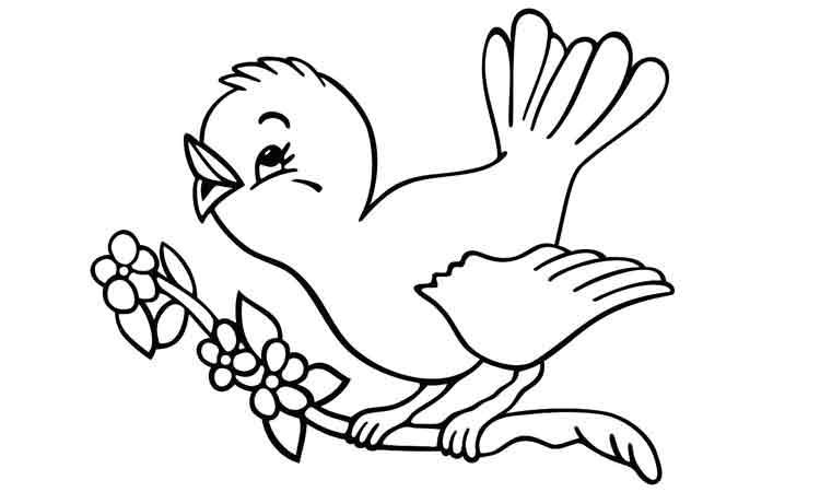 Contoh Mewarnai Burung