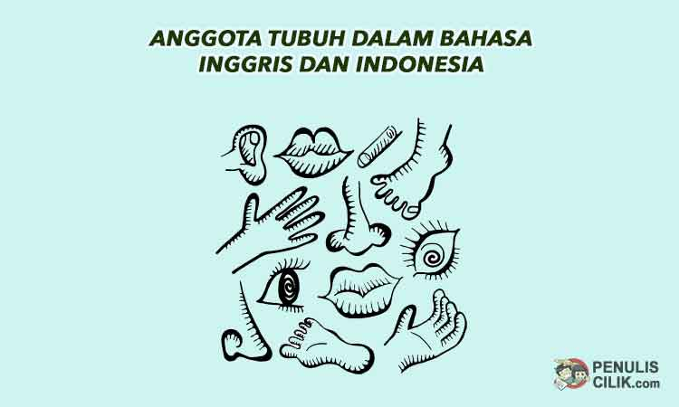 49 Anggota Tubuh Dalam Bahasa Inggris Dan Indonesia Penulis Cilik